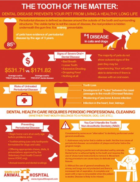 South Loop Animal Hospital Infographic